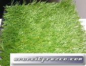 Grass sintetico casi nuevo o segunda mano.